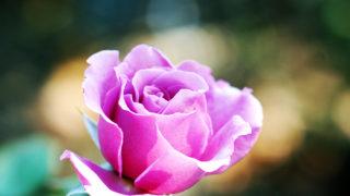 第16話 きっと花は咲く