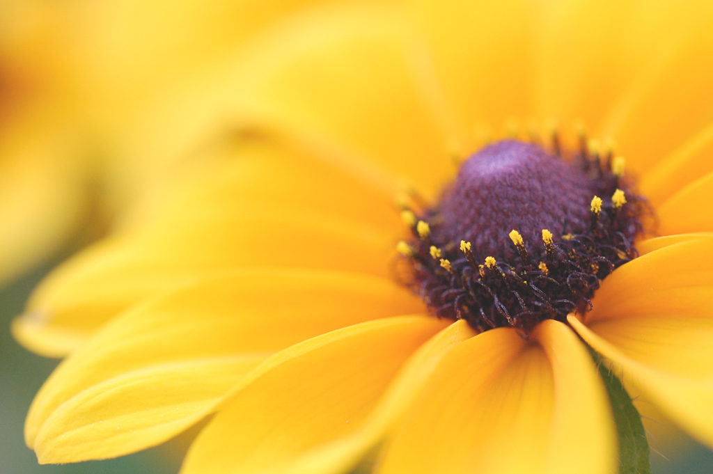 タムロン60mmマクロ レビュー 花の作例