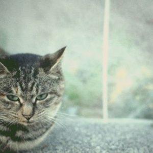 デジカメでかわいい猫を撮影