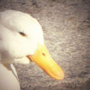 なつかしい感じの撮り方、レトロ風味に鳥写真