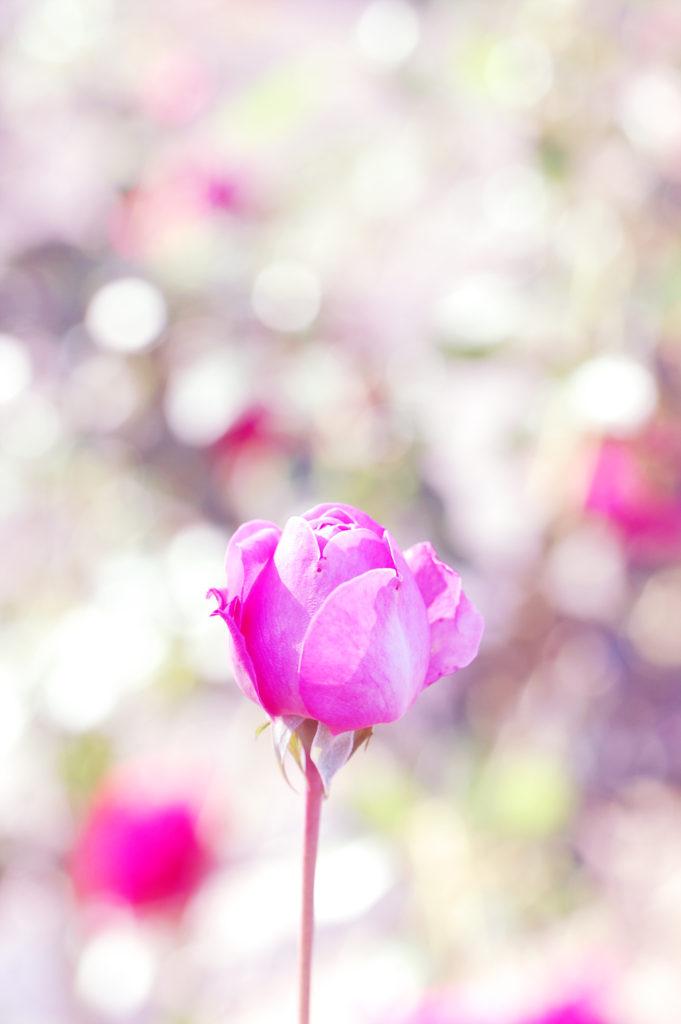 玉ボケでキラキラ写真を撮ろう~デジタル一眼、ミラーレス一眼のカメラ教室~岐阜県大垣市