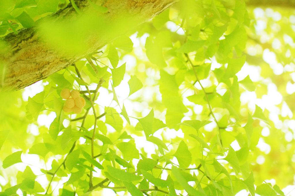 はれときどきカメラのたのしみかた 木漏れ日とやさしい緑 一眼レフで撮影