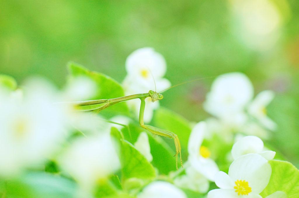 タムロン60mm レビュー 昆虫マクロ撮影