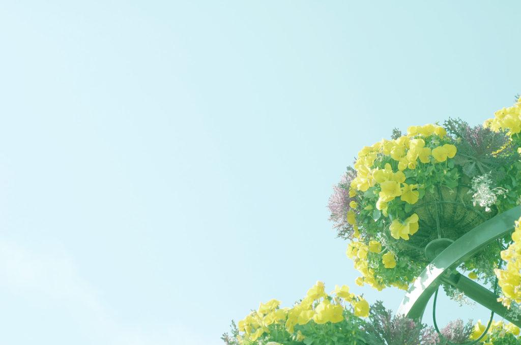 おさんぽ写真、花の写真をかわいく撮ろう、エアリーフォト