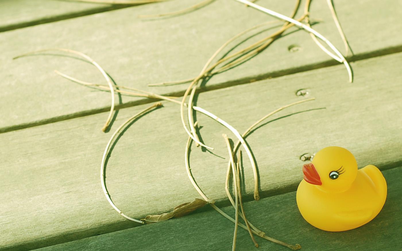 枯れ葉が好き フィルム風 Nikon D40