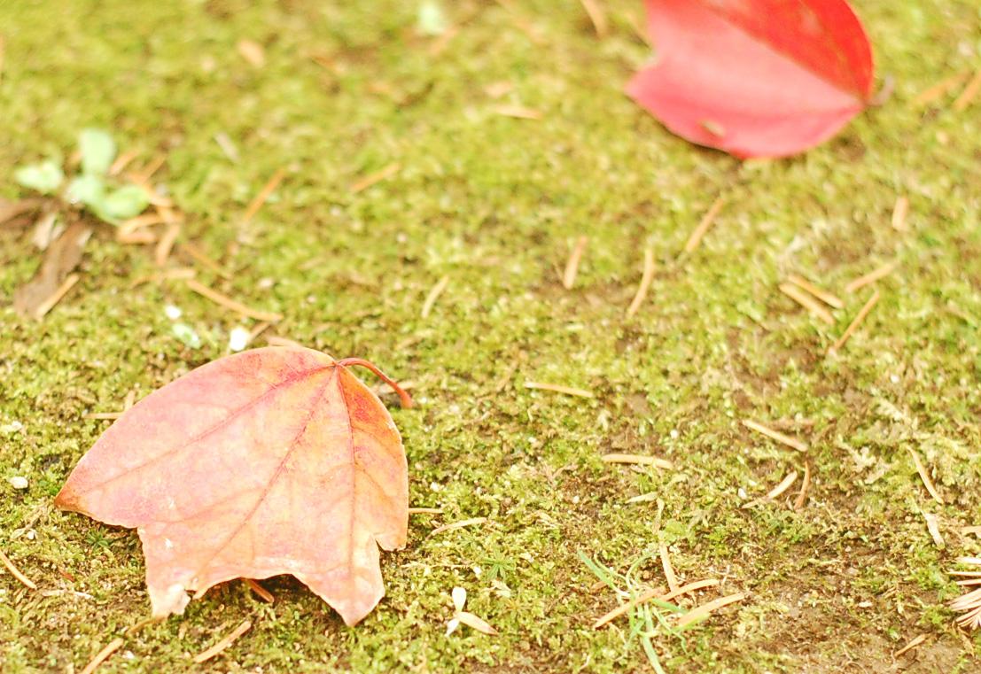 デジタル一眼レフで撮影 単焦点レンズを使用 かわいい葉っぱ