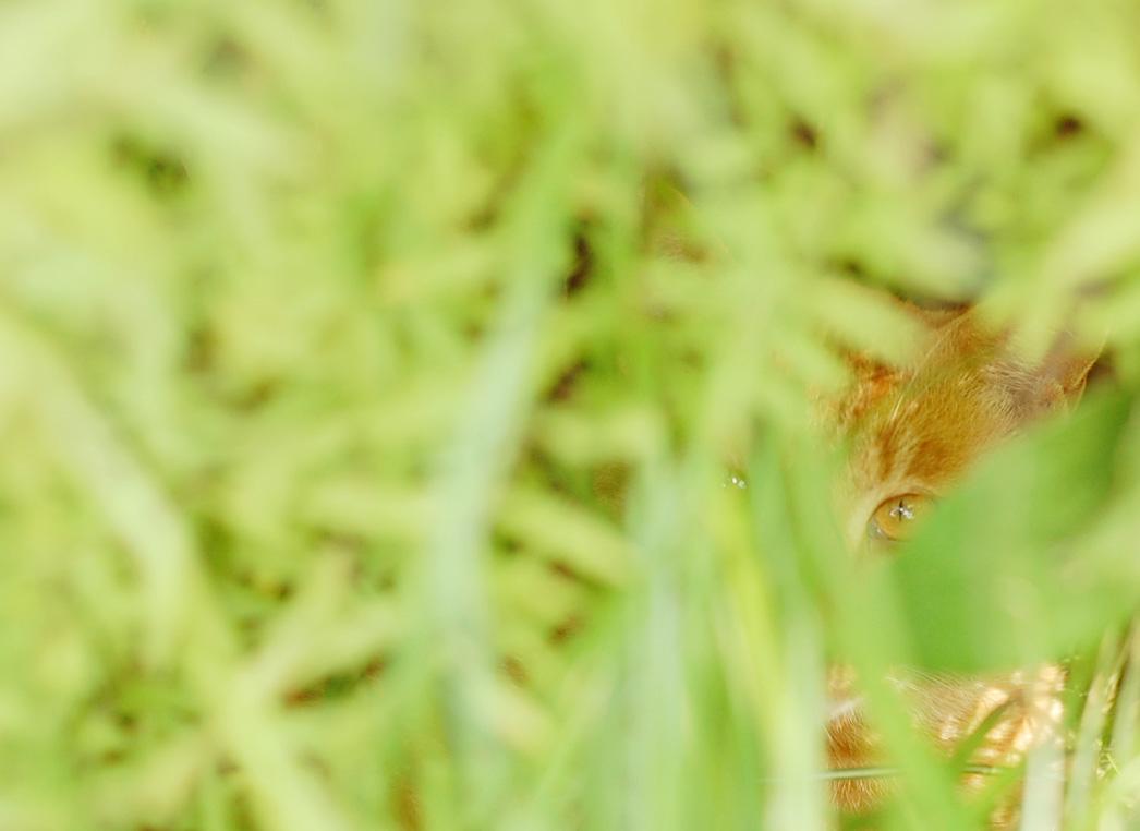 ねこを撮影するときのちょっとしたコツ 押さえの1枚を撮ろう