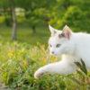 第148話 2月22日は「猫の日」