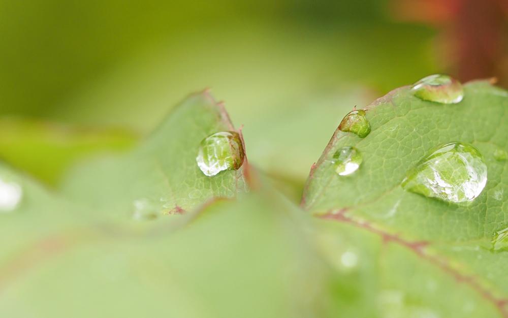 OLYMPUS DIGITAL CAMERA マクロレンズ、水滴