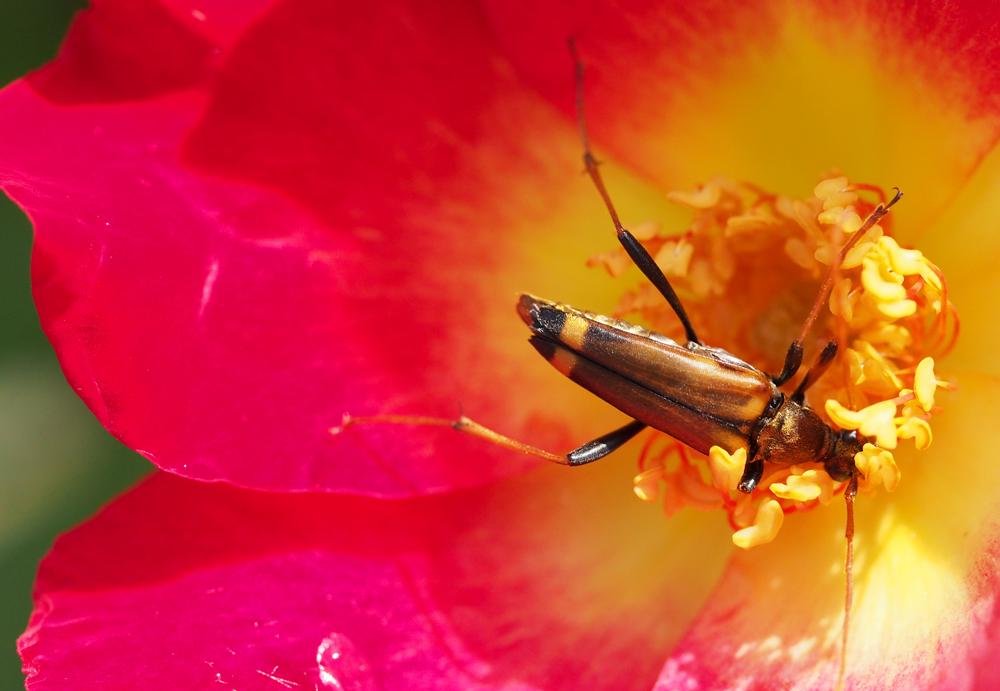 昆虫と花 OLYMPUS E-PL6 マクロレンズ使用