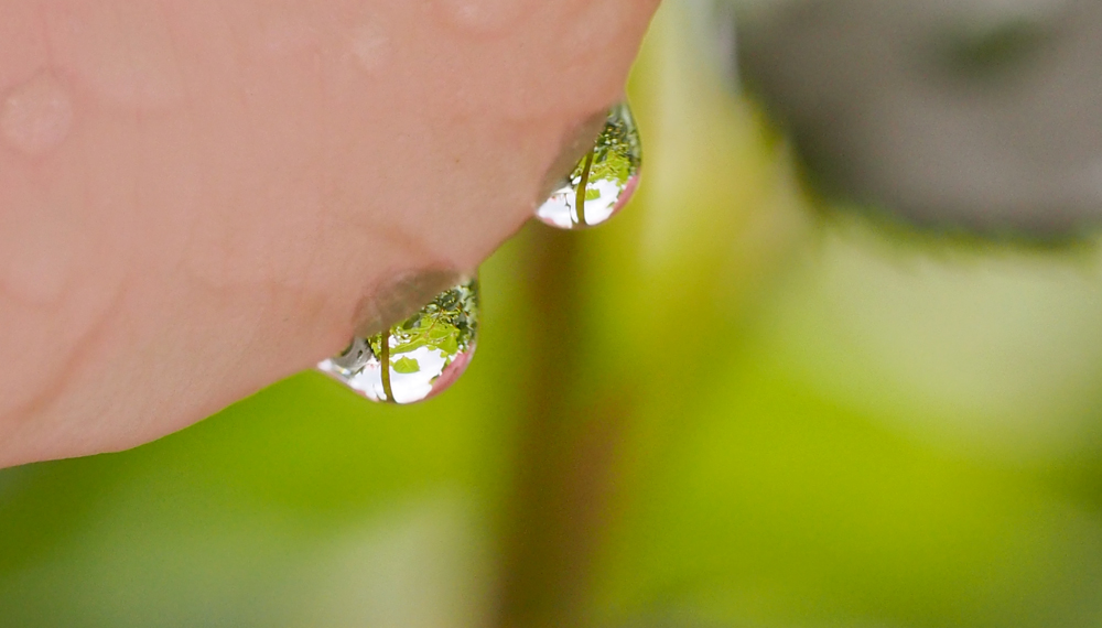 OLYMPUS DIGITAL CAMERA マクロレンズで撮影 水滴
