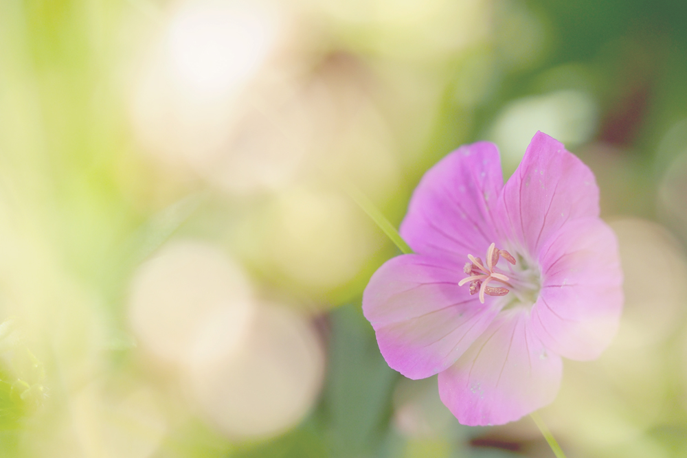 OLYMPUS DIGITAL CAMERA マクロレンズを使用 花フェスタ記念公園