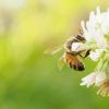 第47話 今度はハチだった