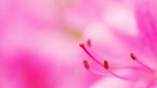 第52話 ピンク色に包まれて~サツキ~