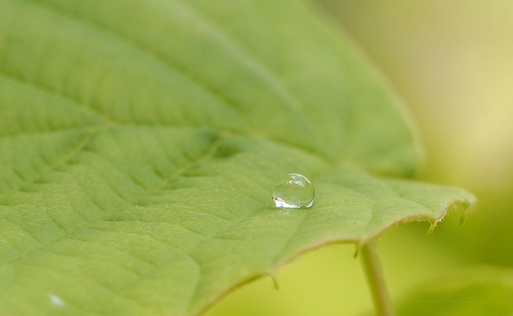 OLYMPUS DIGITAL CAMERA ガラスのような水滴