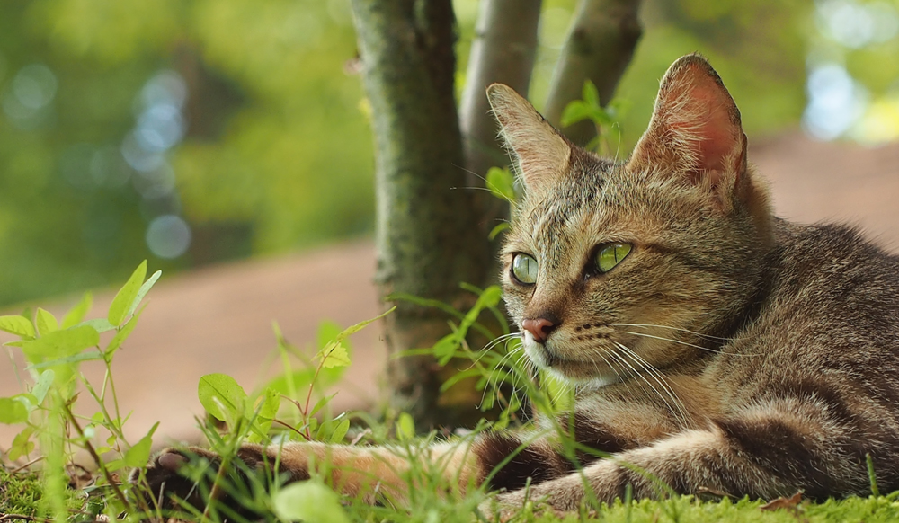 OLYMPUS DIGITAL CAMERA 猫写真 日本昭和村にて