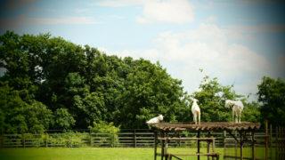 ヤギを撮る~牧場でヤギを撮った写真をもとに~