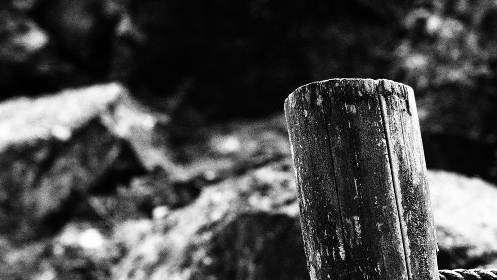 モノクロ写真 森の中で撮影