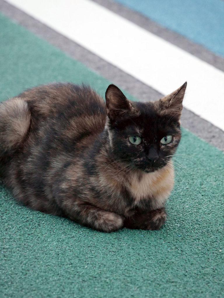 香箱座りをする野良猫さん ミラーレス一眼で撮影 岐阜