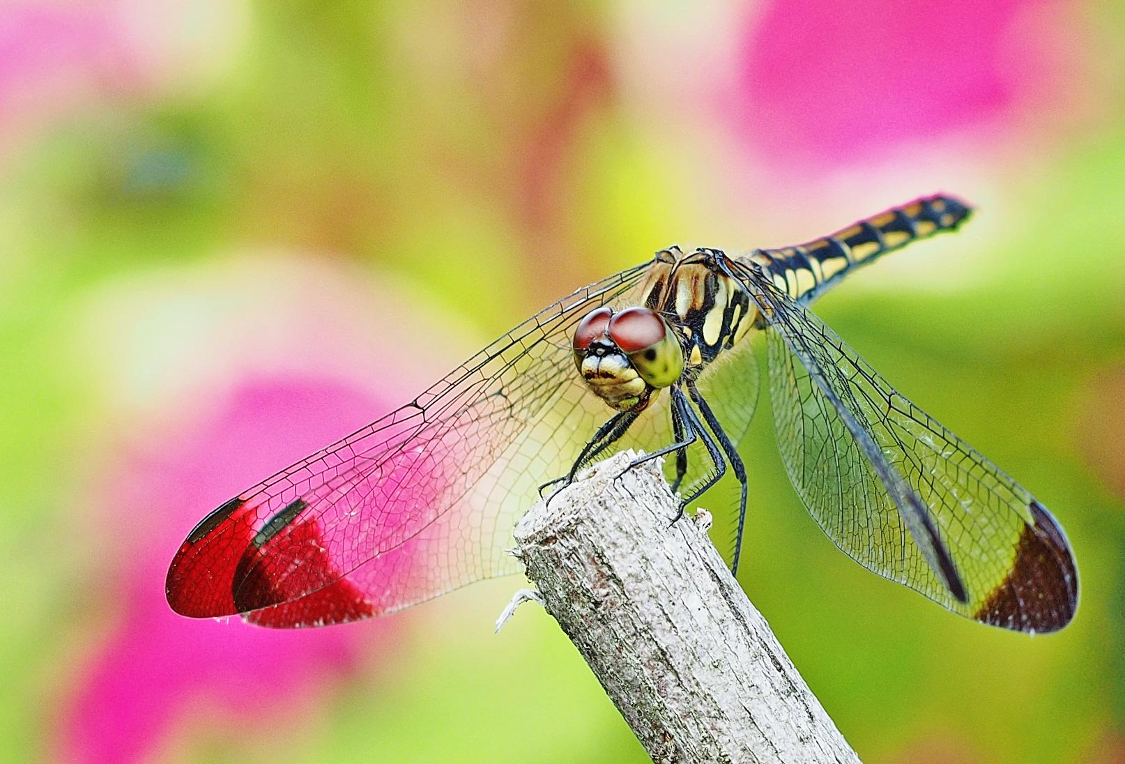 写真のコントラストについて考えてみよう 昆虫をコントラスト強めで撮ってみる
