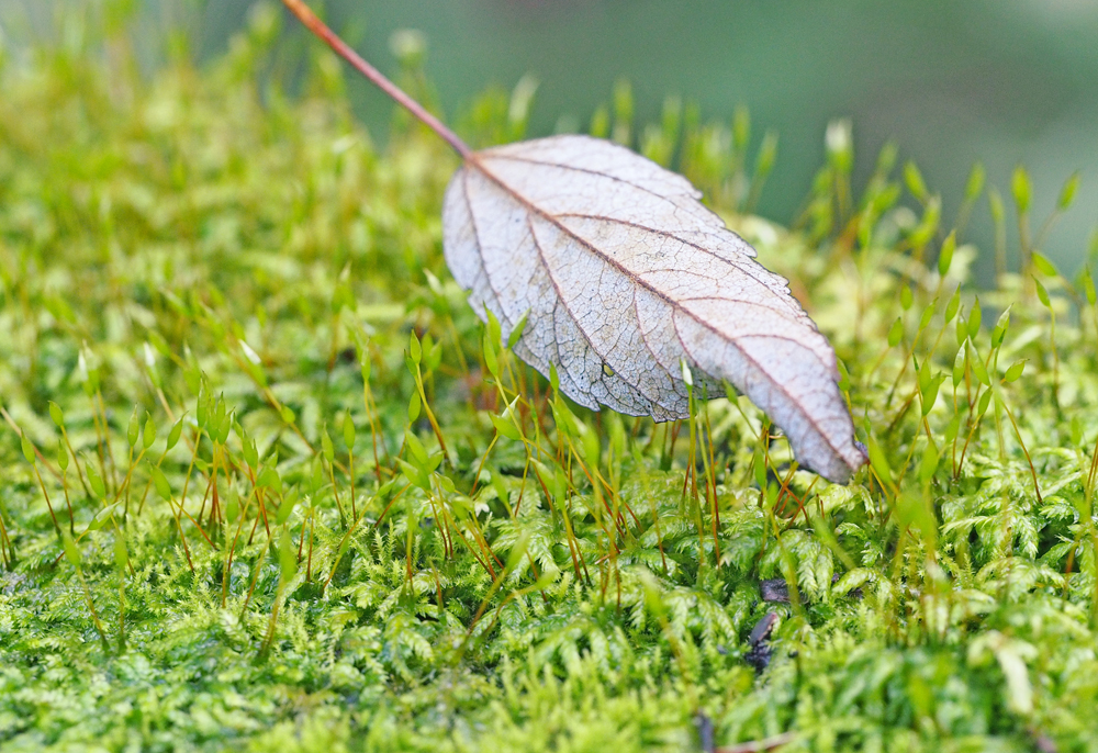 カメラを持って歩いてみよう 何気ない葉っぱに注目してみる