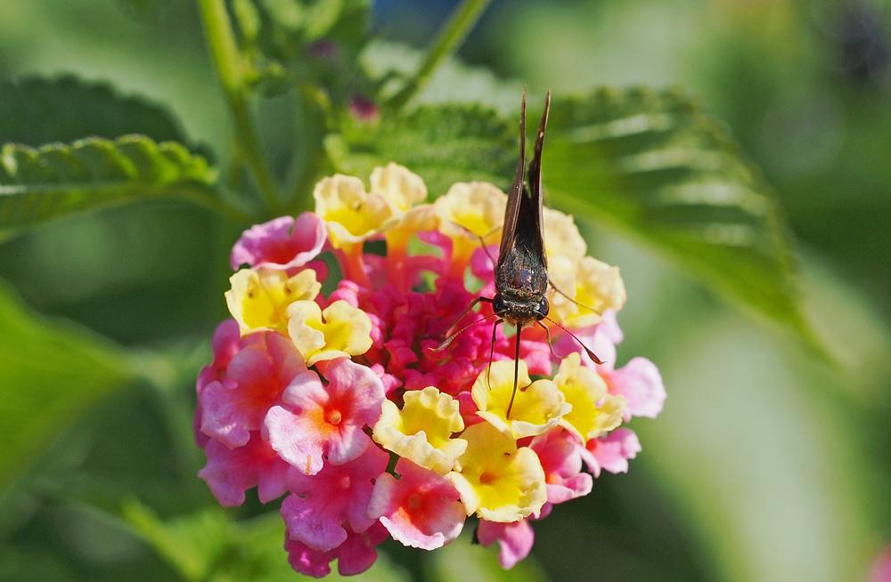 命のポーズをする昆虫