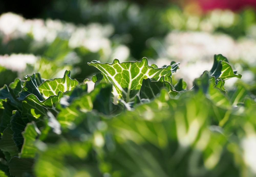 逆光で撮影した謎の葉っぱ