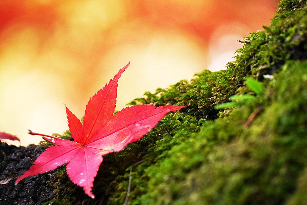 紅葉 赤と緑、オレンジ