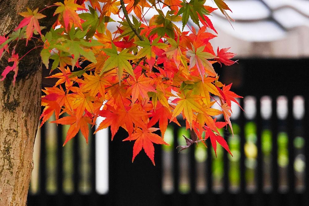【秋ならではをたのしむ】秋の色を撮ってみよう