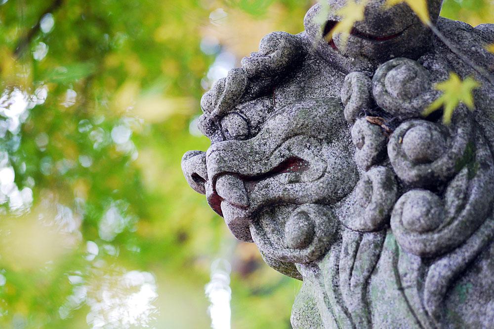 青紅葉と狛犬 単焦点レンズで撮影 岐阜
