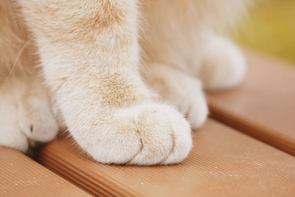 ねこのかわいい足