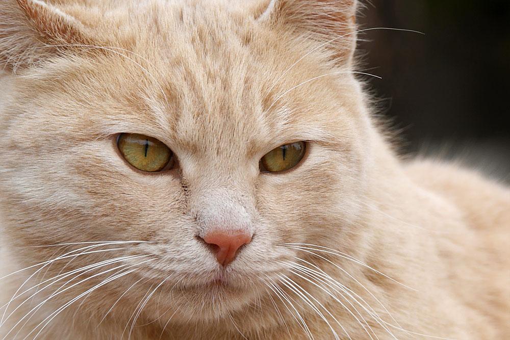 望遠レンズで野良猫を撮影