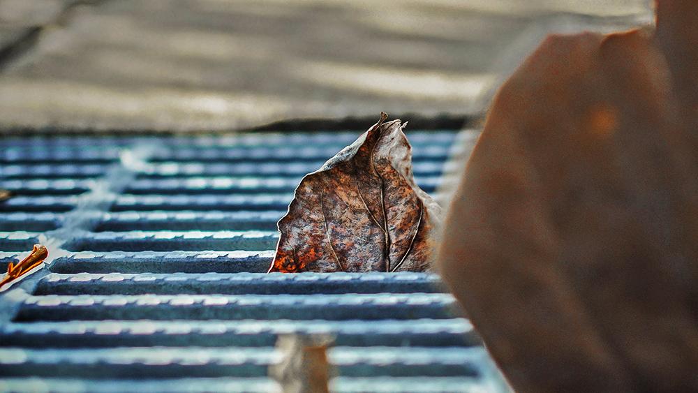 溝にはまる枯れ葉