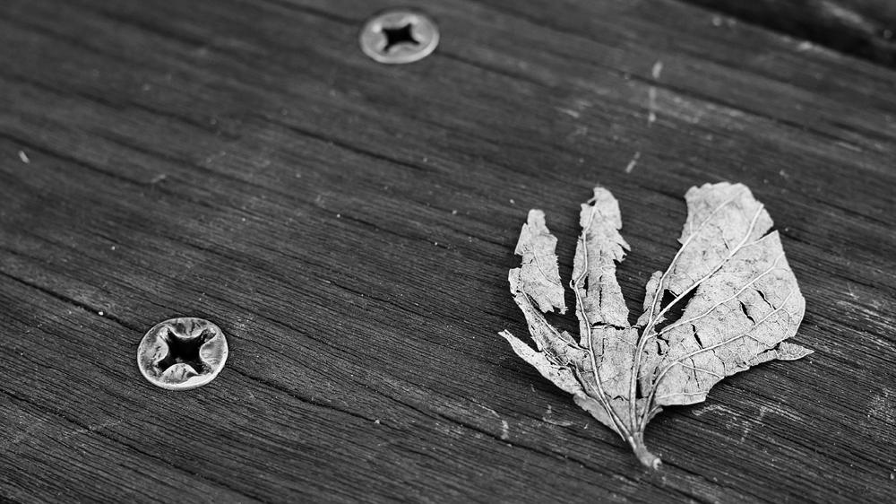 枯れ葉が好き いろいろな枯れ方