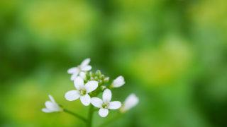 第169話 山で出会った白い花