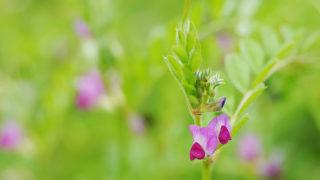 第168話 春の草花たち