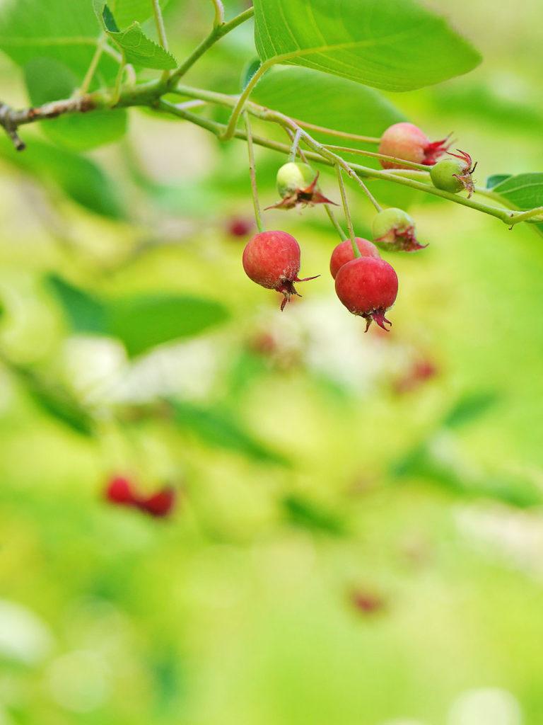 ターシャの庭 花フェスタ記念公園
