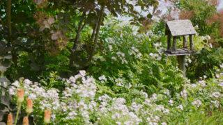 第190話 ターシャの庭(2)