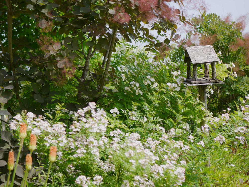 初夏のターシャの庭