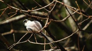第277話 えさを食べる鳥たち