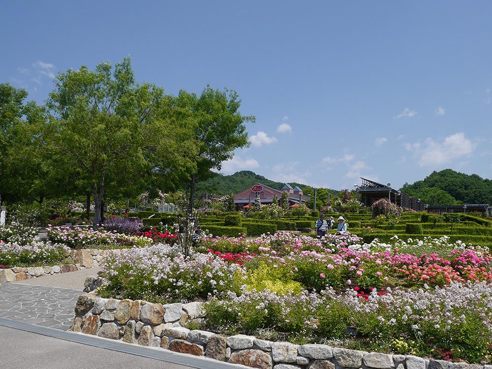 花フェスタ記念公園 西ゲート付近