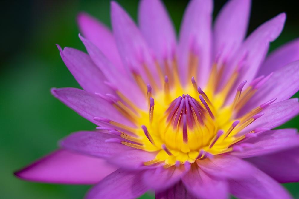 花はユニークな質感の宝庫