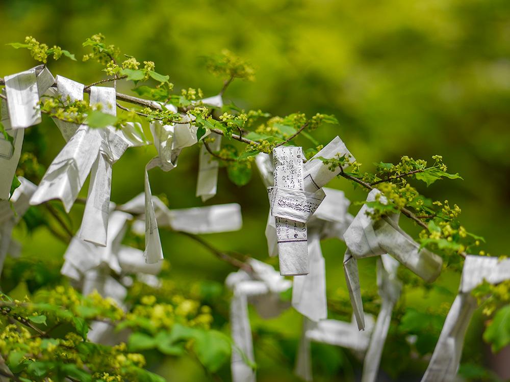 朝倉山真禅院にて