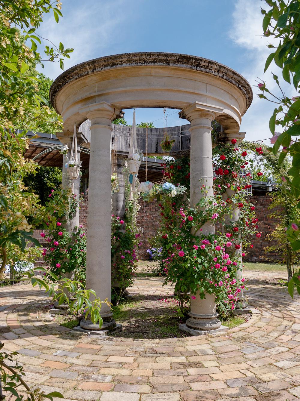 花フェスタ記念公園 ジョセフィーヌのバラ園
