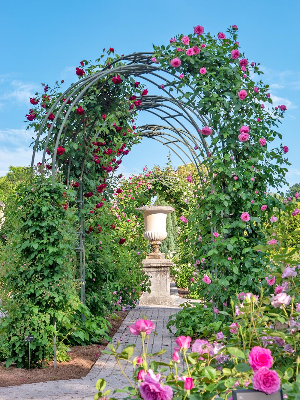 花フェスタ記念公園 香りの庭